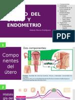 Cuerpo Del Útero y Endometrio
