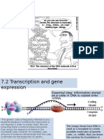 7.2 Transcription and Gene Expression
