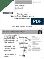 Nucleic Acids PPT