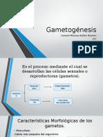 Gametogénesis.pptx