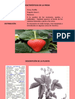 team_fresa.pdf