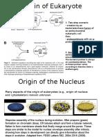 Origin of the Nucleus