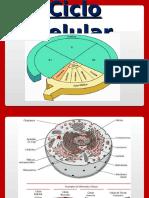 4_Ciclo Celular e Mitose