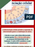 6. Diferenciação Celular