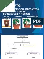 TAREA PLANTAS- CRISTOFER