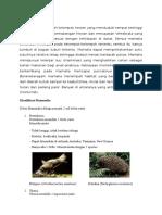 Klasifikasi Mammalia Siiiiiiiiiiiap