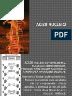 acizii_nucleici.