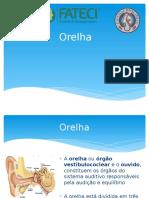 Orelha.pptx