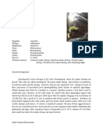 Pseudosquilla ciliata_shorter500words