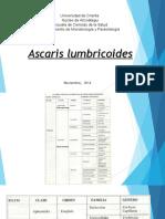 Tema Ascaris Lumbricoides
