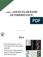 Chapter 8 - Molecular Basis of Inheritance