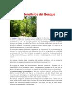 Los Beneficios Del Bosque