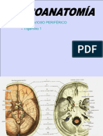 6-Sistema Nervioso Periferico(Trigemino 1)