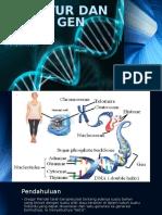 Struktur Dan Fungsi Gen