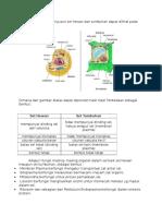 Perbedaan Struktur Penyusun Sel Hewan Dan Tumbuhan Dapat Dilihat Pada Gambar Dibawah Ini