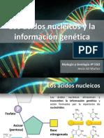 Los ácidos nucleicos y la información genética