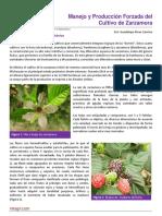 07 Manejo y produccion forzada de zarzamora.pdf