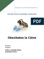 Obezitatea La Caine Clinica Nutritie