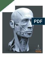 Anatomía - 3d Cabeza II