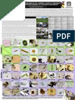Fitoplancton y Zooplancton Humedales Bogotá D.C. 2016. Experiencia Localidad de Suba Humedal Córdoba y Conejera (microalgas, protozoos, rotiferos, anelidos, platelmintos, entre otros)