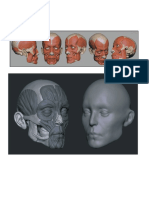 Anatomía - 3d Cabeza III