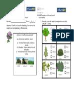 Guía N5 Tipos de Plantas