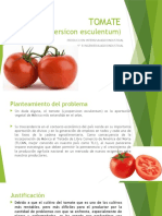 TOMATE 2