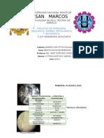 Trabajo de Mineralogia Óptica-Cotrina Ildefonso, Manuel