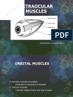 extraocularmuscles-120707104457-phpapp01