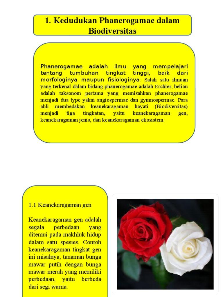 Perbedaan Warna Pada Bunga Mawar Merupakan Contoh Keanekaragaman Tips Membedakan
