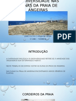 Biodiversidade Nas Dunas Da Praia de Angeiras