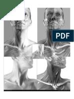 Anatomía - 3d Cabeza V