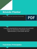 Boveda Plantar