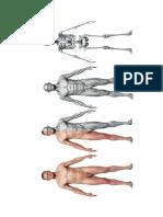 Anatomía - Cuerpo III
