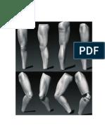 Anatomía - 3d Pierna I