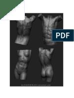 Anatomía - 3d Torso I