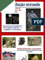 9. Rep. sexuada.pdf