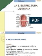 5 anatomia dental odontologia.pdf