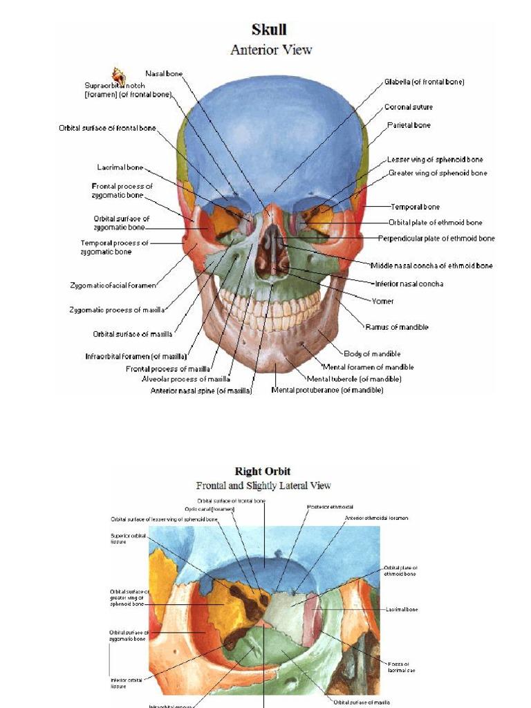 Netter\'s Atlas of Human Anatomy PDF