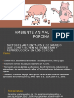 Ambiente Animal Porcina