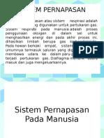 p. Sistem Pernapasan
