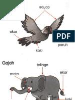 Bahagian Badan Haiwan Dst t1