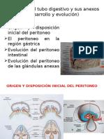 Peritoneo del tubo digestivo y sus anexos.pptx