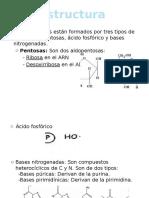 Estructura ácidos nucleicos