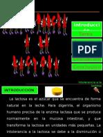 Intolerancia a La Lactosa Barreto-rivero-cano