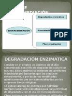 TIPOS DE BIORREMEDIACION.pptx