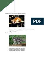 mammalogy portfolio