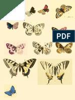 Printable Butterlflies
