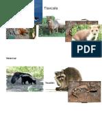 Fauna Estados Pic