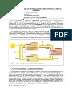 TEMA18-MICROORGANISMOS.doc
